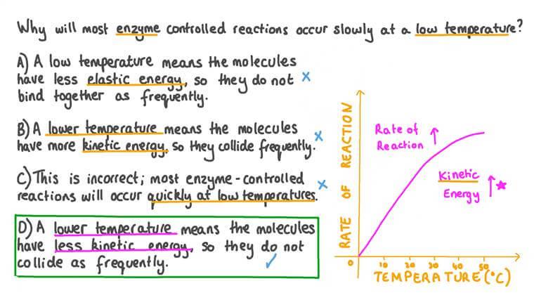 Expliquer l'effet d'une température basse sur la vitesse des réactions enzymatiques