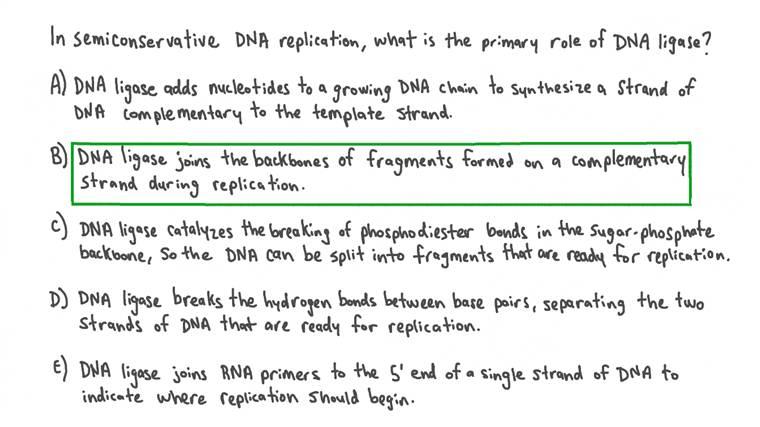 Décrire le rôle de l'ADN ligase