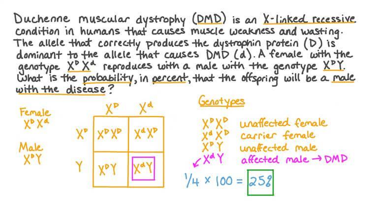 Déterminer la probabilité de maladie dans les caractères liés au chromosome X