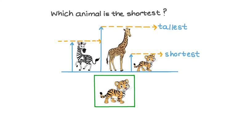 Comparar el tamaño de animales dibujados