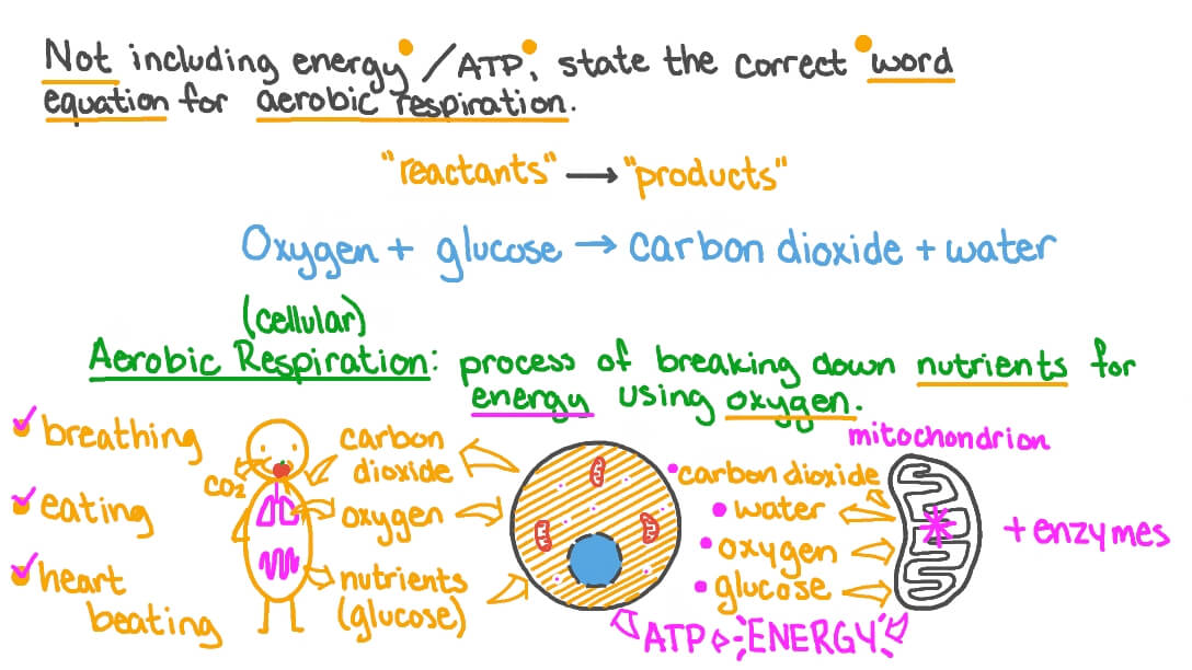 Question Video Stating The Overall Word Equation For Aerobic Respiration