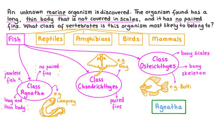 Répertorier des organismes en classes sur la base de caractéristiques données