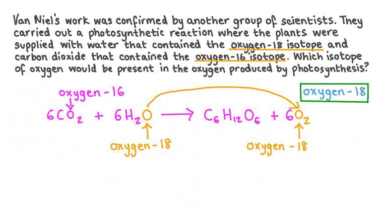 Décrire les expériences sur les isotopes de l'oxygène qui ont confirmé les idées de Van Niel