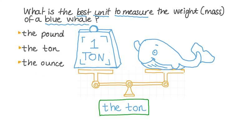 Identificar la mejor unidad para medir la masa de una criatura