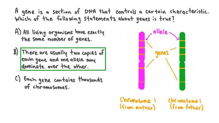 Rappeler les caractéristiques des gènes