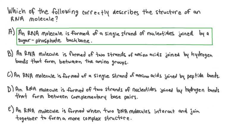 Décrire la Structure de l'ARN