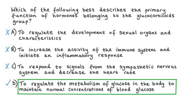 Décrire la principale fonction des hormones glucocorticoïdes