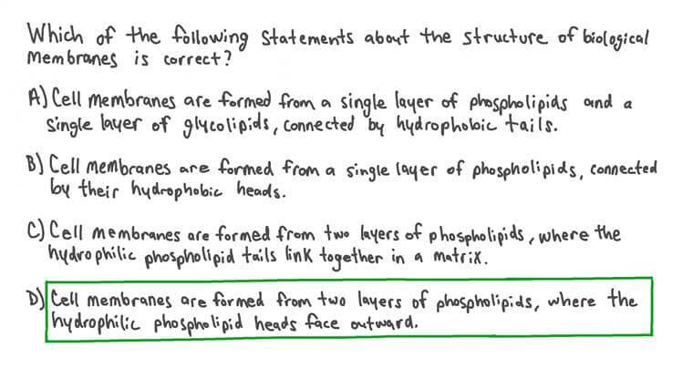Décrire la Structure des Membranes Biologiques