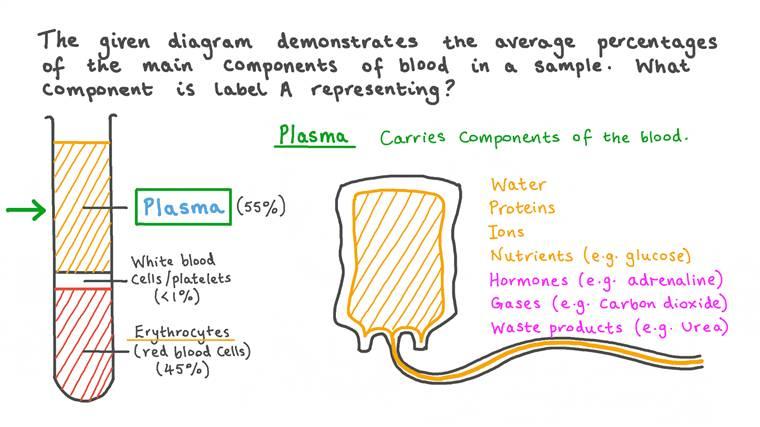 Rappeler les pourcentages des principaux composants sanguins