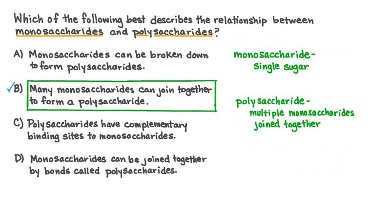 Describing the Relationship between Monosaccharides and Polysaccharides