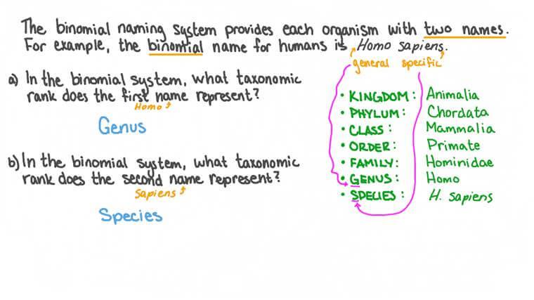 Lesson: Taxonomic Hierarchy | Nagwa
