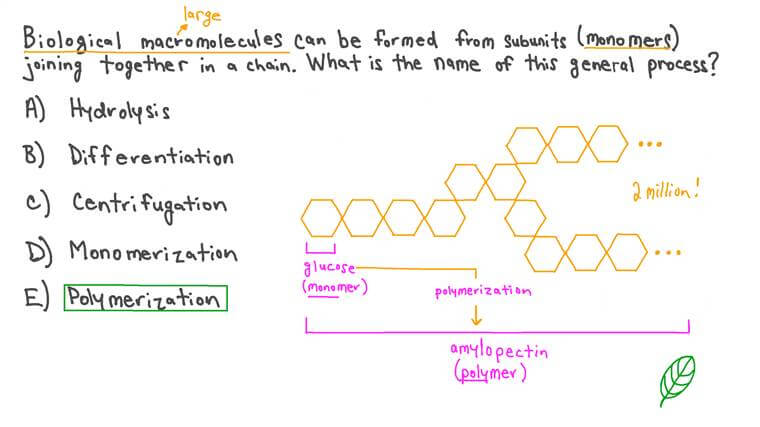 Describing the Formation of Macromolecules from Monomer Subunits