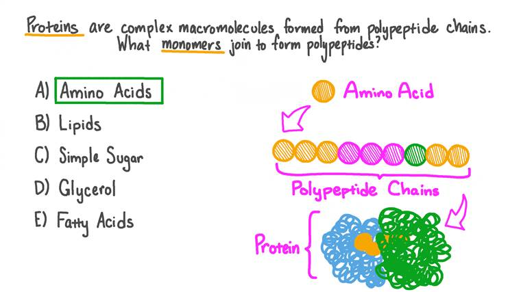 Identifying the Monomers That Form a Polypeptide Chain