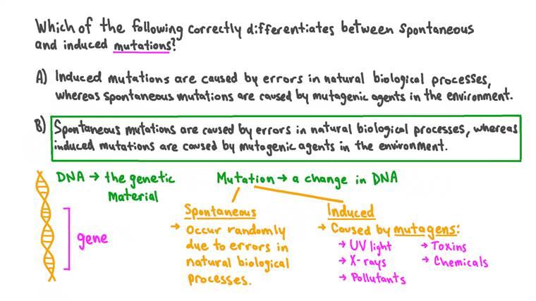 Comparer les mutations spontanées et induites