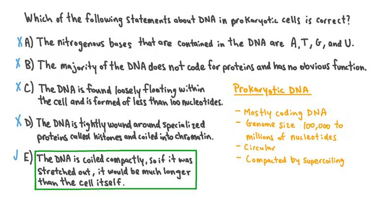 Rappel des caractéristiques de l'ADN procaryote