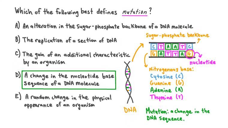 Définition du terme mutation