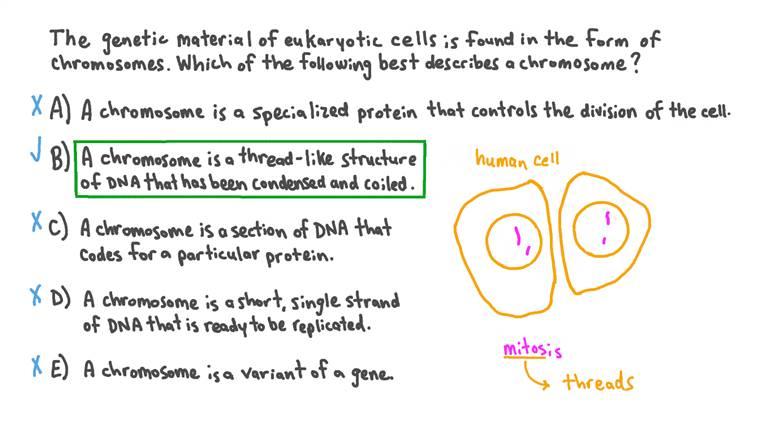 Identifier la description correcte du chromosome