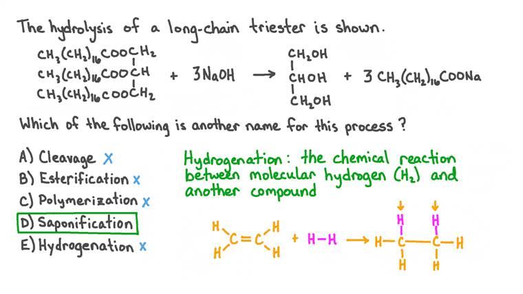 Identifier un autre nom pour l'hydrolyse d'un triester à longue chaîne