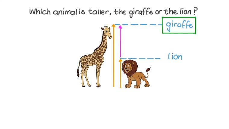 Identifying the Taller of Two Given Objects