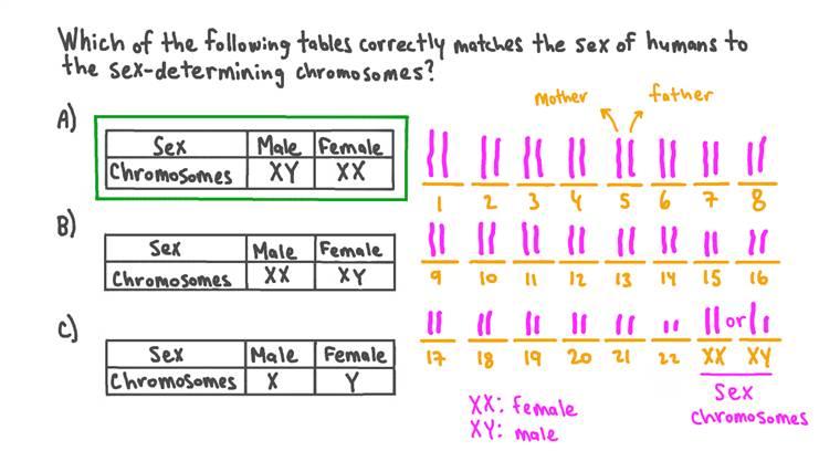 Correspondance entre le sexe biologique et les bons chromosomes