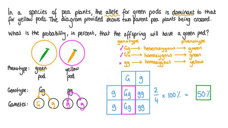 Calculating the Probability of a Pea Plant Inheriting a Green Pod