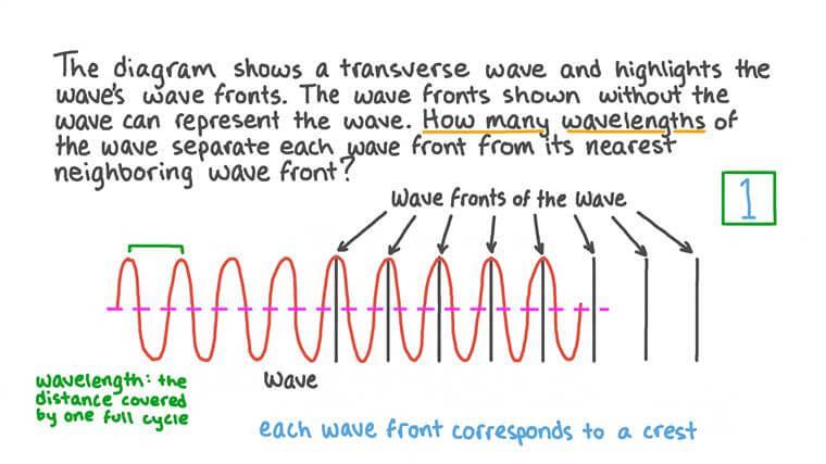 Représentation d'une onde transversale à l'aide de fronts d'onde