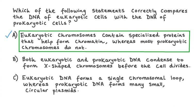 Comparer l'ADN des procaryotes et des eucaryotes