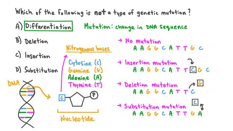 Comprendre les différents types de mutation de l'ADN