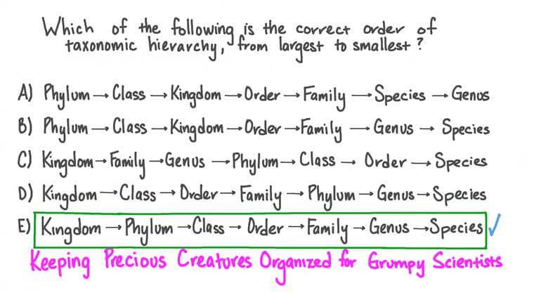 Rappeler le bon ordre de la hiérarchie taxonomique