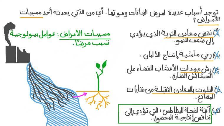 التعرف على أمثلة لأمراض النباتات الناتجة عن مسببات الأمراض