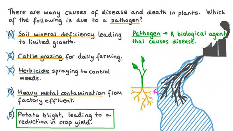 Identifying Examples of Plant Diseases Caused by Pathogens